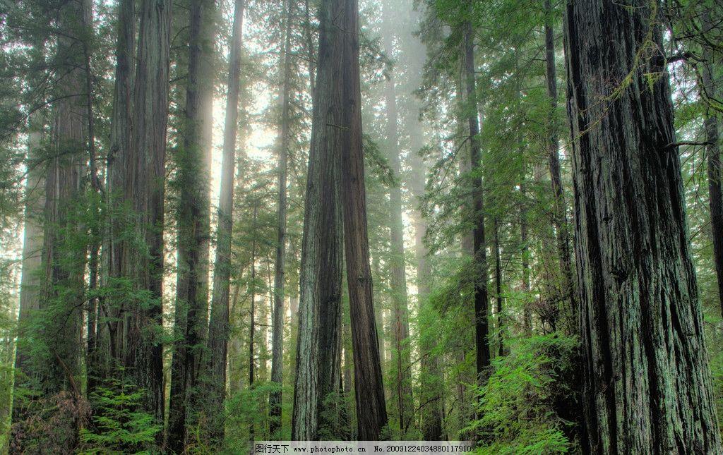 森林 参天大树 阳光 春天 树林 自然风景 自然景观 摄影 240dpi jpg