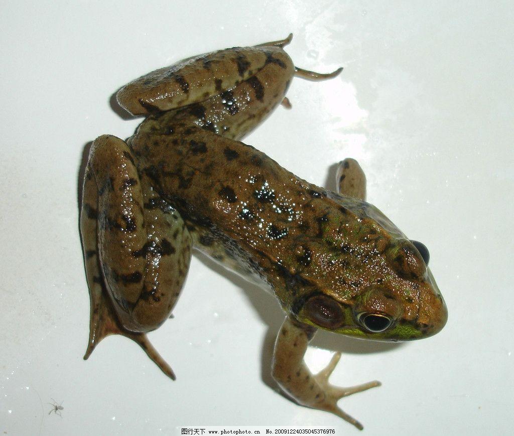 青蛙 爬行动物 表皮肌理 荆棘 野生动物 生物世界 摄影 72dpi jpg