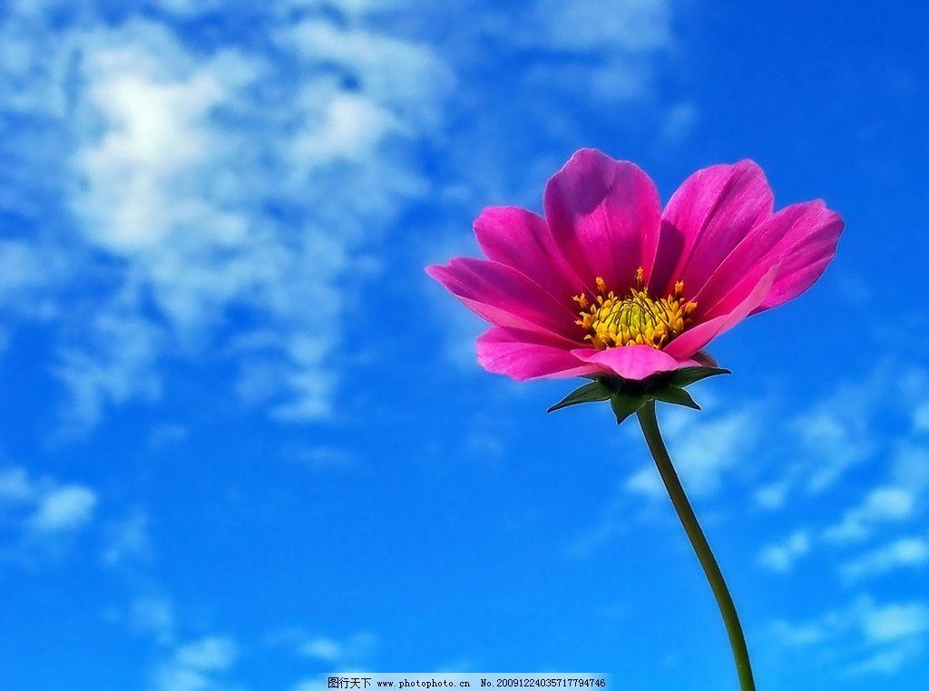 小萍花的可爱标志