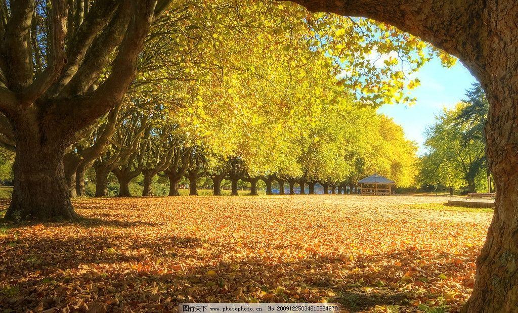 金秋美景 金秋 落叶 金黄 树木 自然风景 自然景观 摄影 240dpi jpg