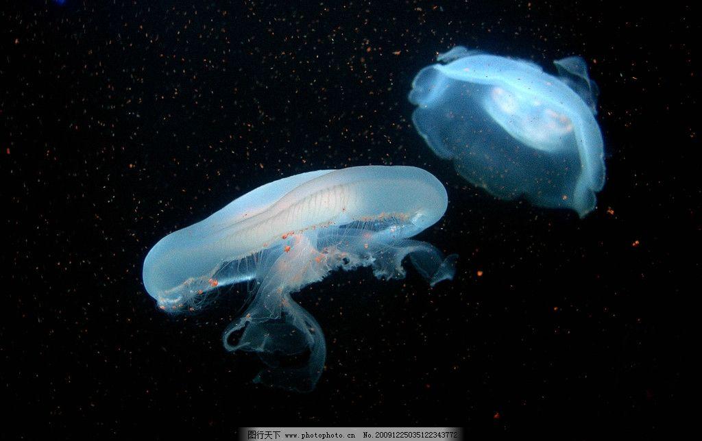 水母世界 大自然 景观 景象 海底 水中 生物 无脊椎 腔肠动物