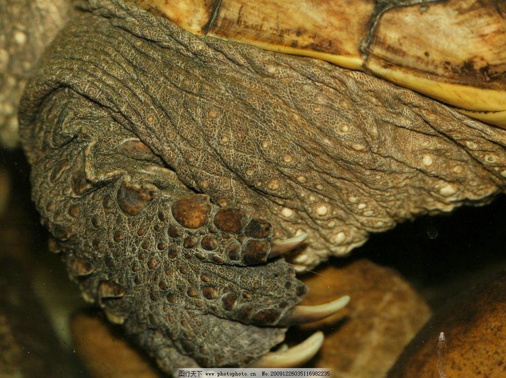 乌龟 爬行动物 表皮肌理 荆棘 海洋生物 生物世界 摄影