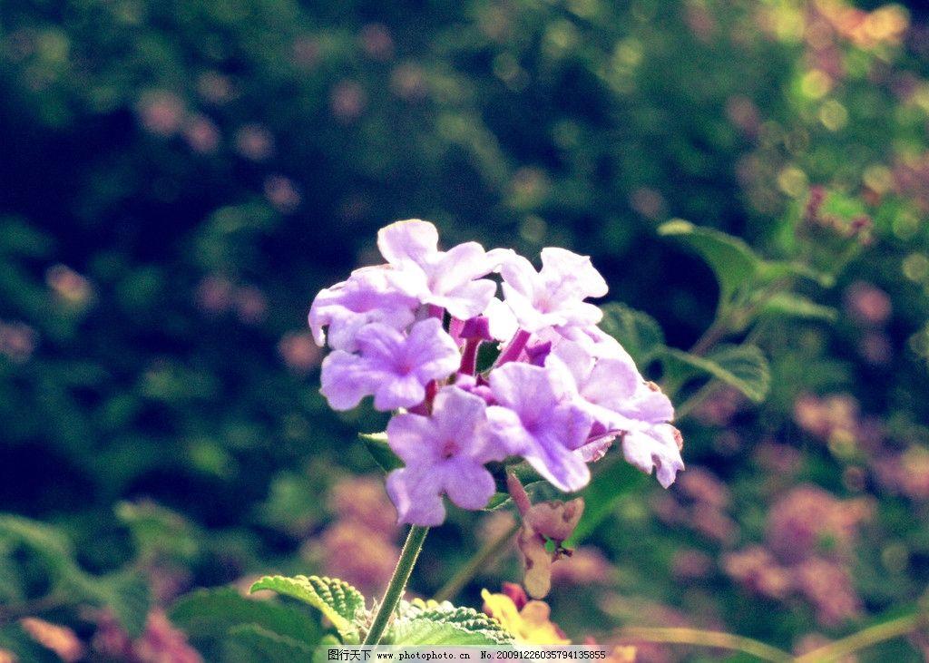 一支独秀 路边不知名的小花 紫色 阿宝色 一朵 一枝 生活休闲