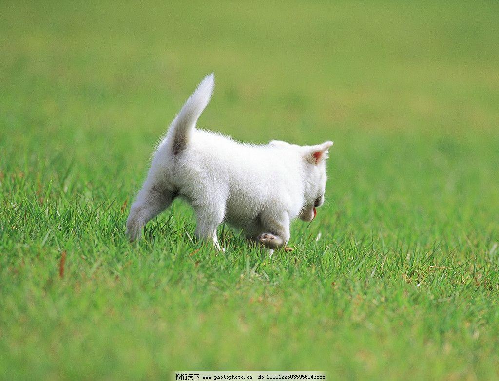动物图片,小狗 摄影-图行天下图库