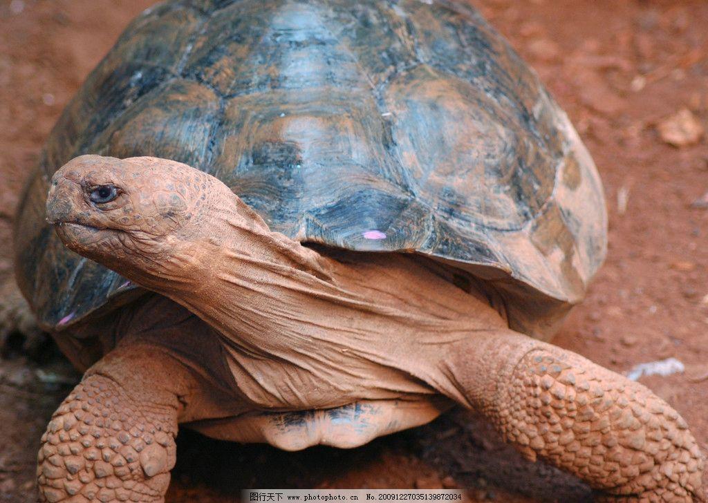 海龟 龟 爬行动物 表皮肌理 荆棘 质感 粗糙 生物 海洋生物 生物世界