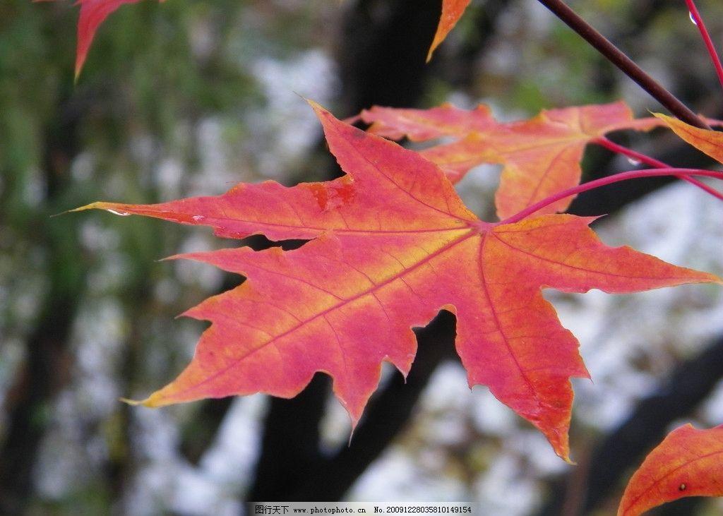 树叶落在田野里