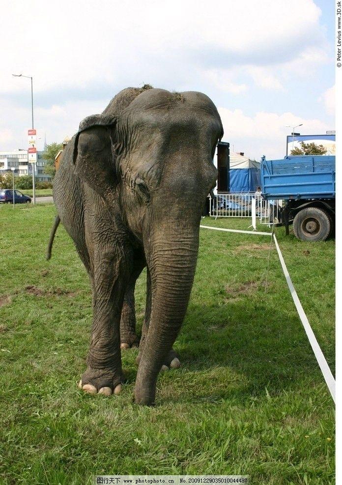 大象 动物 表皮肌理 荆棘 质感 粗糙 生物 非洲动物 高清图片素材