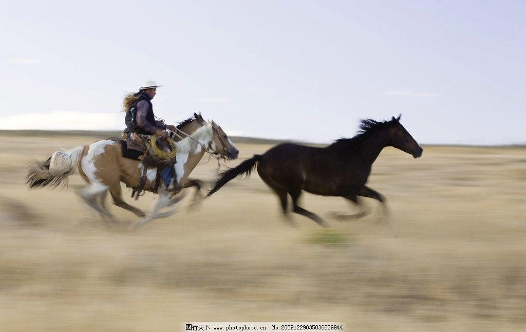 骑马 马术 遛马 骑士 奔腾中的马 马 马图片 高清马图片 牛仔 西域