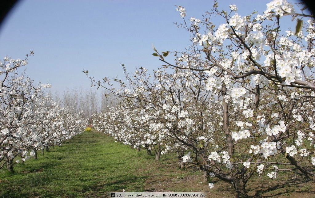 扬州风景 扬州景象 旅游摄影 旅游风景 自然风景 风光 江南 桃花园
