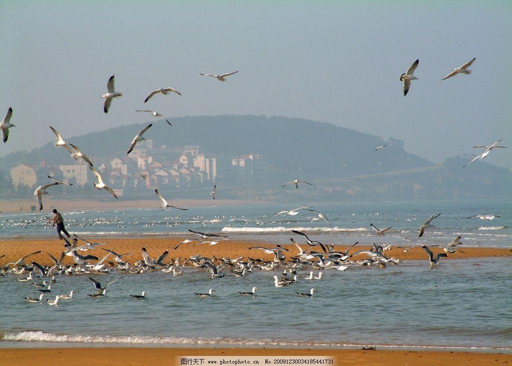 海鸥 海浪 浪花 大海 冬天 自然风景 旅游摄影 摄影 72dpi jpg