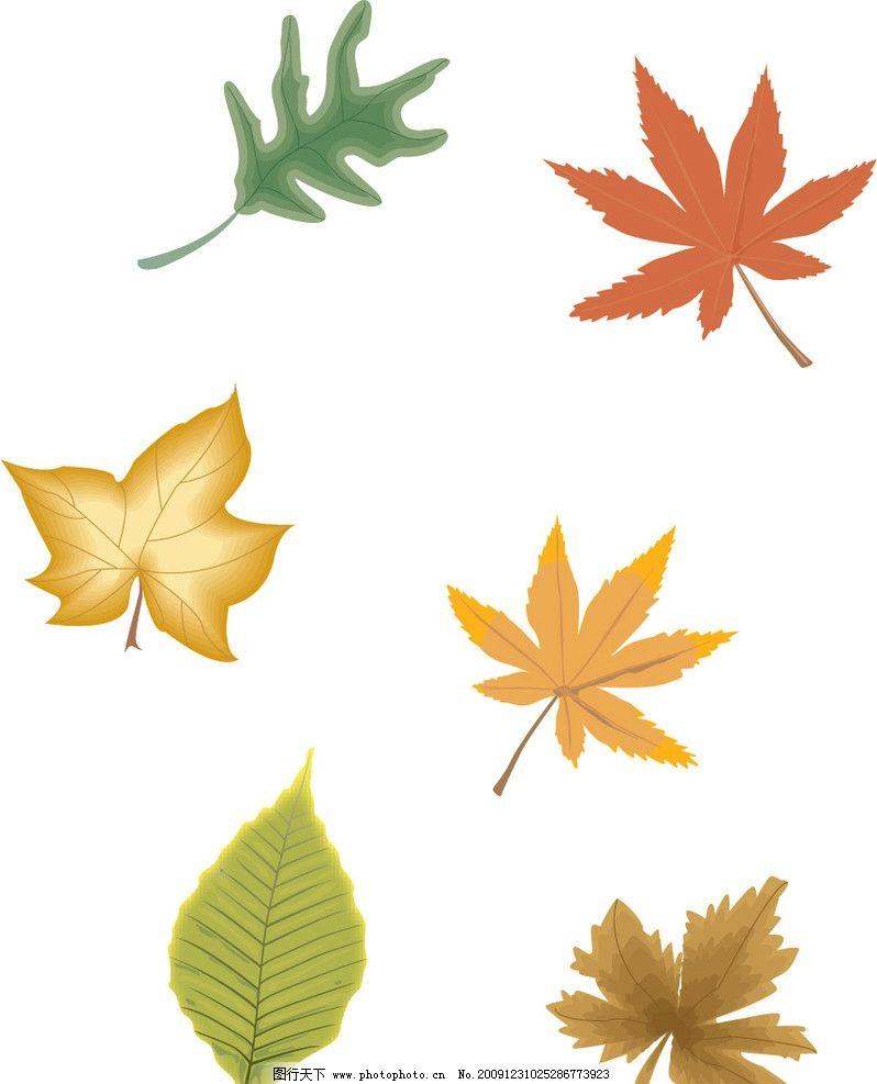 树叶 矢量树叶 手绘树叶 树木树叶 生物世界 矢量 ai